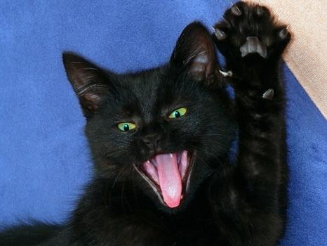 фото чёрные котята