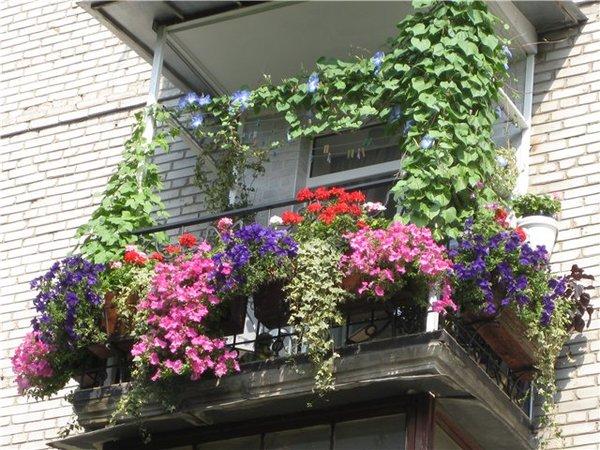 for Fiori primaverili da balcone