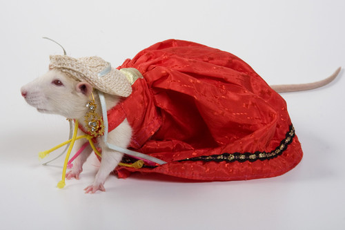 Костюм для крысы своими руками фото