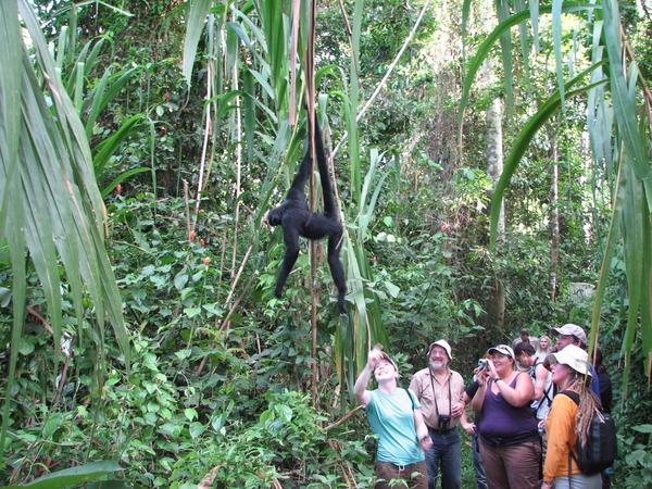 Джунгли в Перу