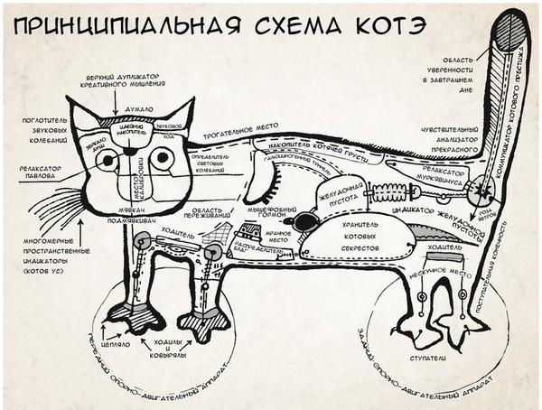 Сердце кота где находится