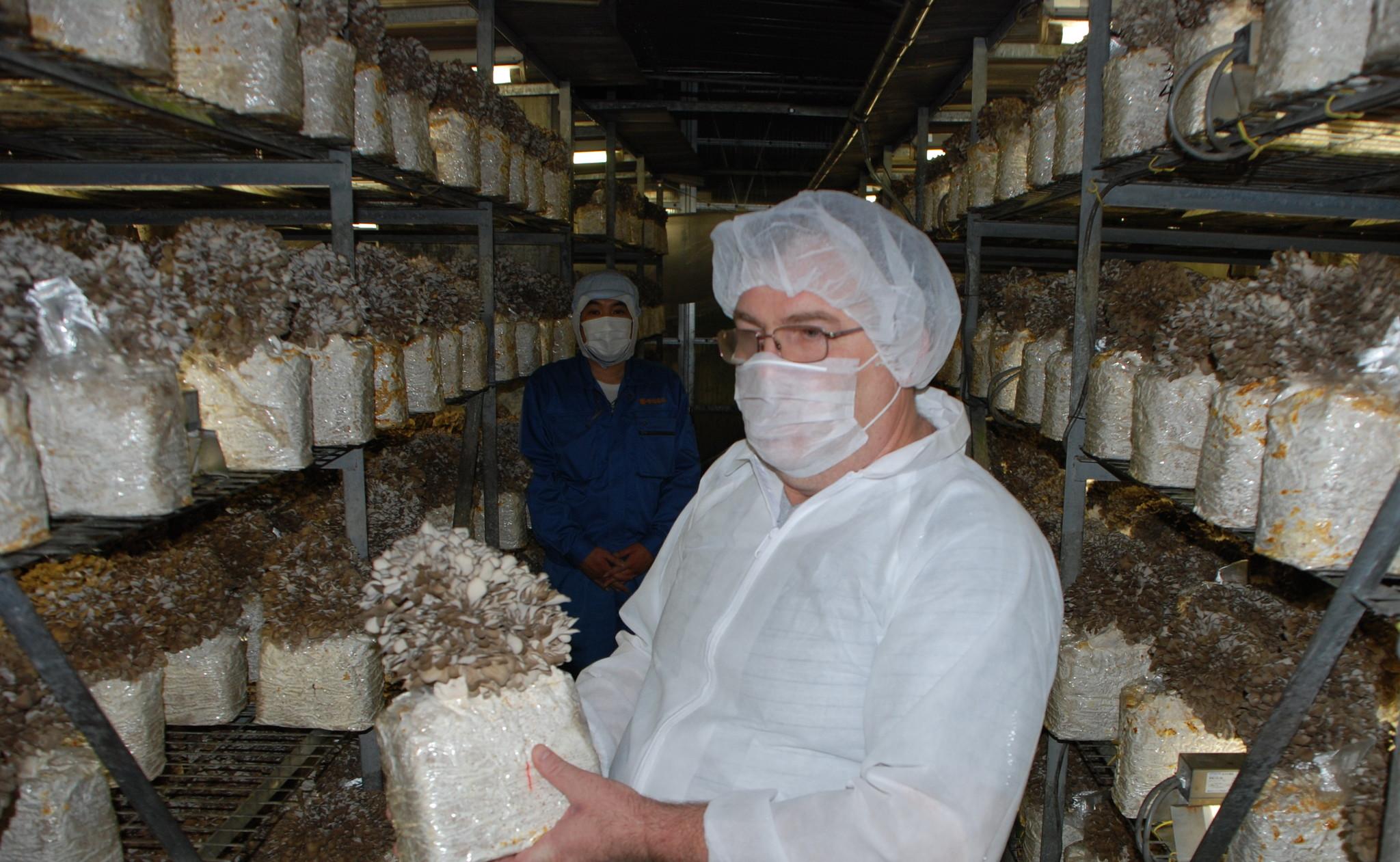 Обучение по выращиванию грибов 62