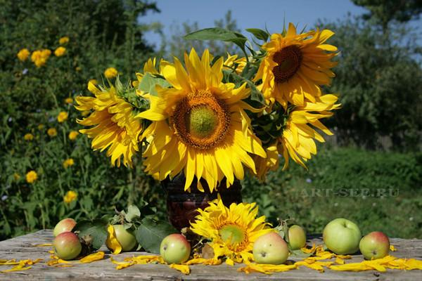 Фото солнце цветы фрукты