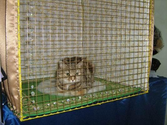 Клетка для кошки своими руками фото 60