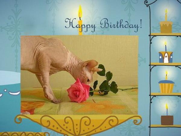 Открытки с днем рождения со сфинксами