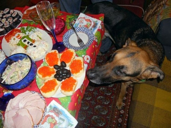 Смехота-23 Собака возле праздничного стола