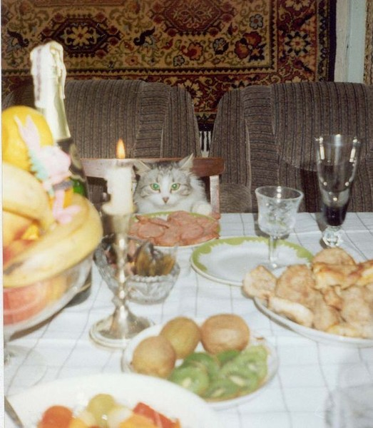 Смехота-23 Кот за новогодним столом