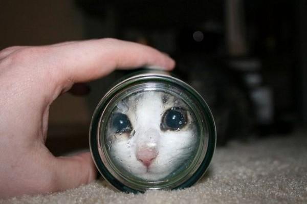 Смехота-23 Кот залез в стакан и смотрит через дно