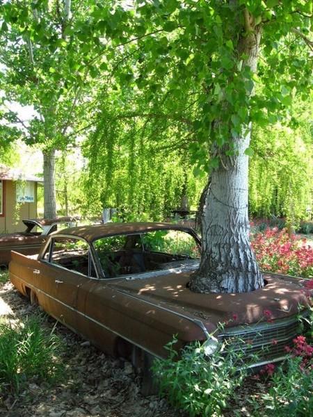 Смехота-23 Дерево проросло сквозь машину