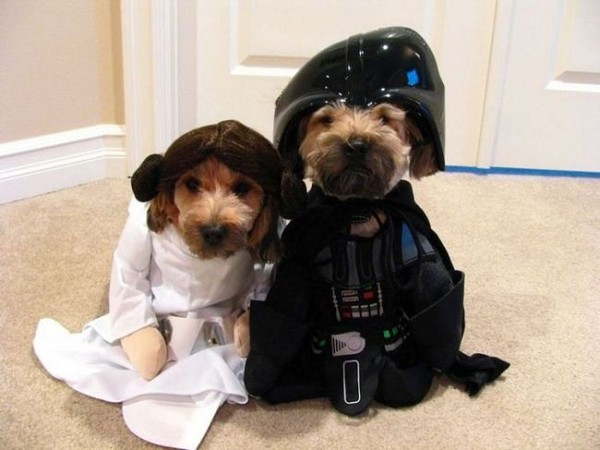 Смехота-23 Собаки звездные воины