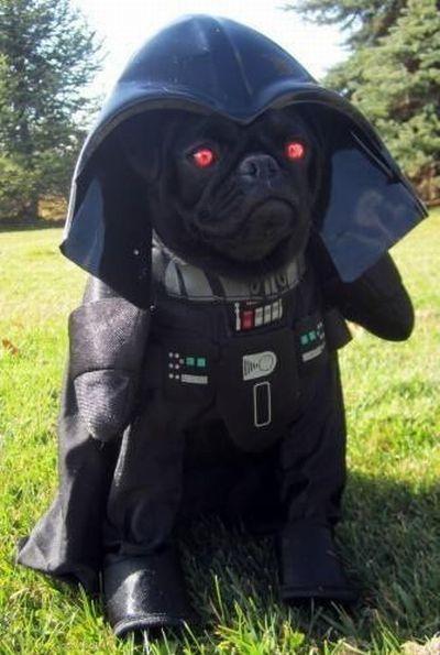 Смехота-23 Собак - спаситель мира и главный злодей
