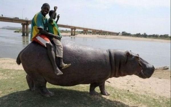 Смехота-23 Африканцы катаются на бегемоте