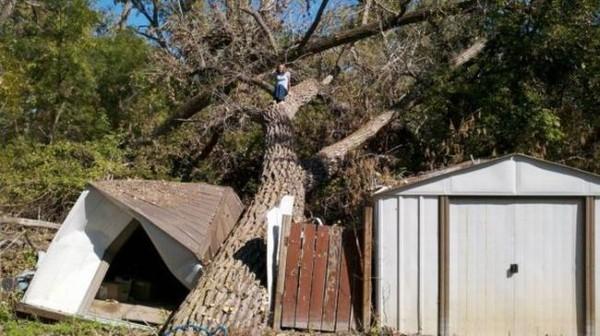 Смехота-23 Девочка залезла на дерево