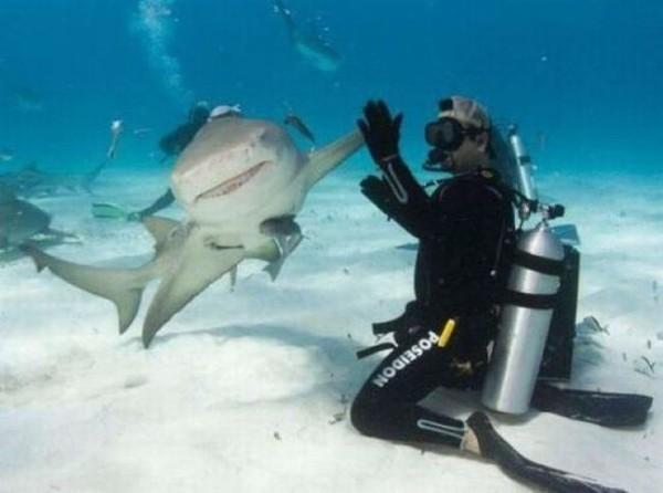 Смехота-23 Потом акула сожрет этого мужика