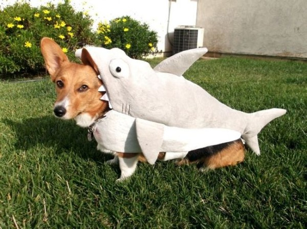 Смехота-23 Собаку нарядили в костюм, как будто ее проглотила акула