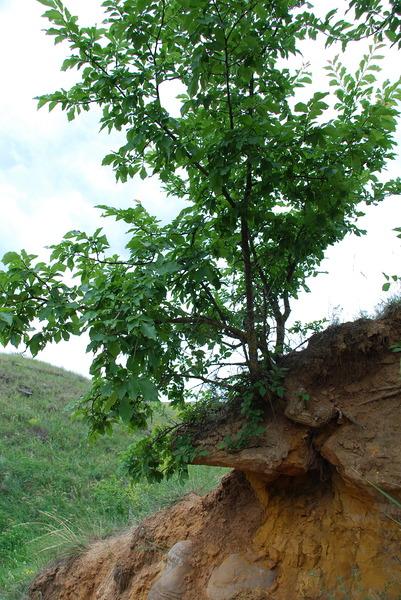 http://content.foto.mail.ru/bk/serdzhio/4925/i-4934.jpg