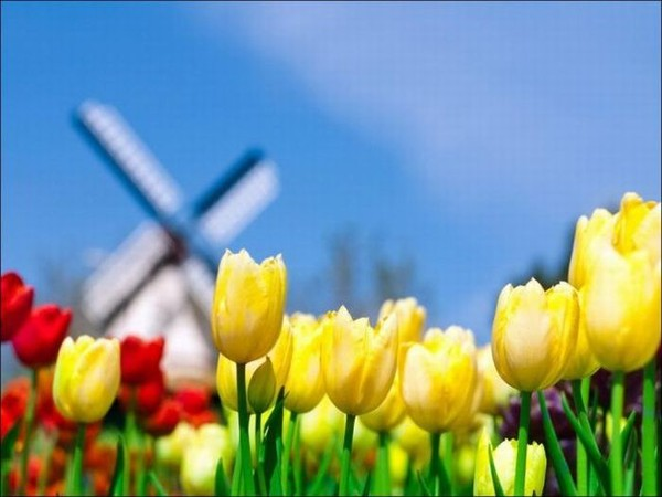С праздником весны, дорогие !
