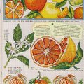 ВЫШИВКА   (кухня, овощи, фрукты)