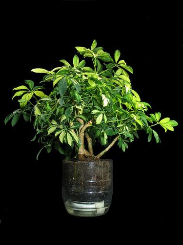 Интересный способ выращивания цветов