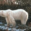 """Млекопитающие.  Фото 39 из презентации  """"Классификация животных """" к урокам..."""