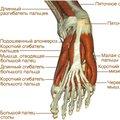 Болит и растет косточка на большом пальце ноги шишка