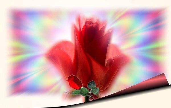 Картинки цветы анимация скачать бесплатно 6