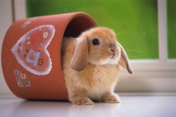 Rabbits Wallpapers.