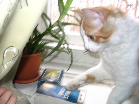 http://content.foto.mail.ru/inbox/regyna/cat/i-11.jpg