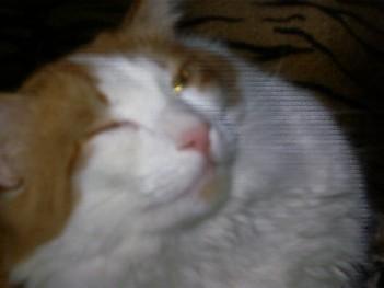 http://content.foto.mail.ru/inbox/regyna/cat/i-26.jpg