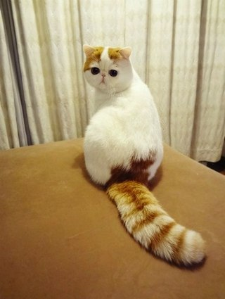 Как называется эта порода кошек