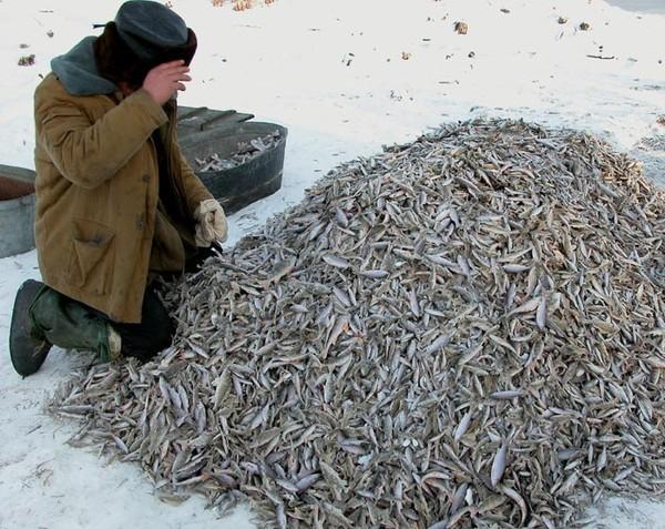 на что ловить рыбу сегодня