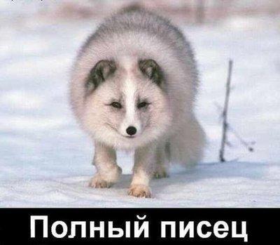 http://content.foto.mail.ru/list/2land2/212/i-390.jpg