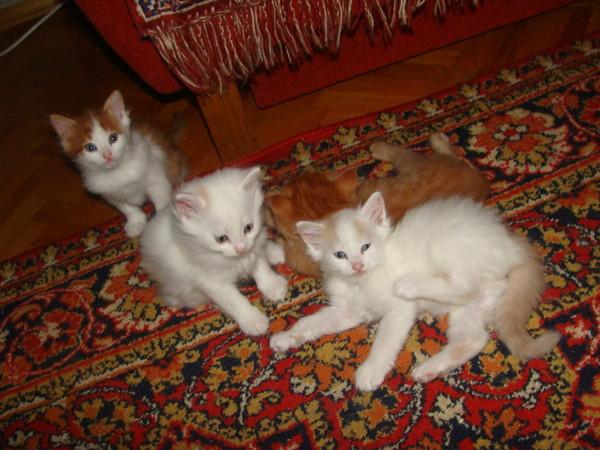 http://content.foto.mail.ru/list/a_nuta2003/36/i-39.jpg