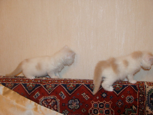 http://content.foto.mail.ru/list/a_nuta2003/36/i-40.jpg