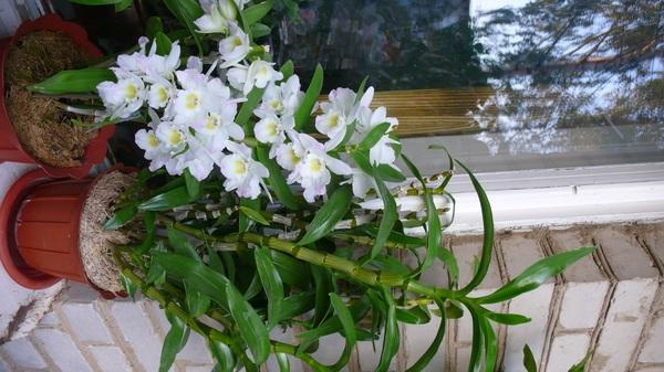 http://content.foto.mail.ru/list/flower_alla/527/i-268.jpg