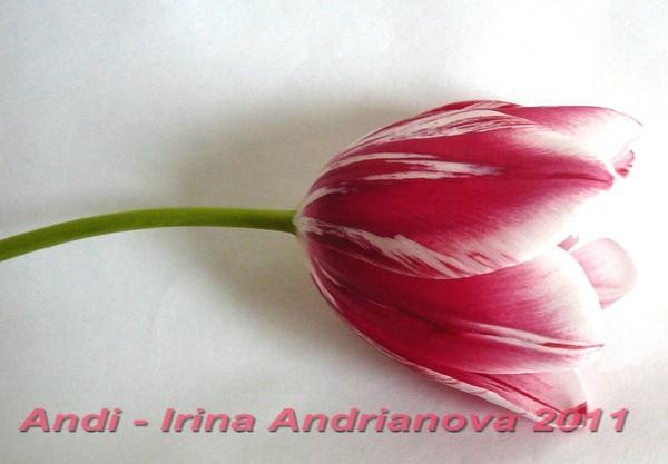 валяние цветка