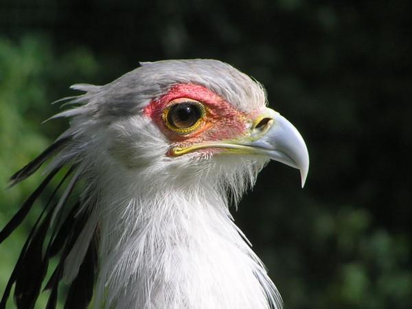 Птицы общая характеристика доклад