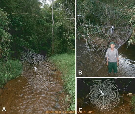Теги. гигантская паутина.