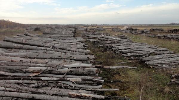 Картинки по запросу лес россии уничтожают картинки