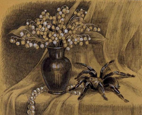 Фото натюрморт с пауком