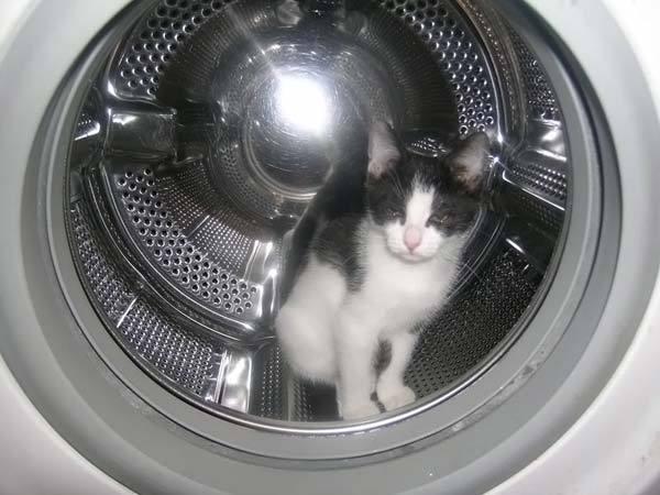 Ремонт стиральной машин Bosch, Indesit, Zanussi, LG, Ariston, Samsung в Москве и Подмосковье.