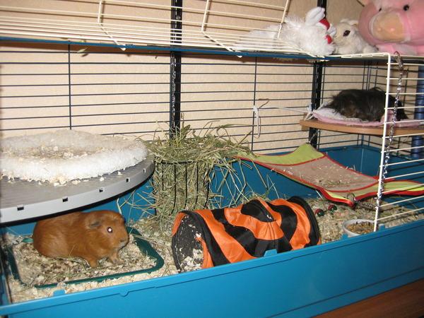 Фото домиков для морских свинок своими руками