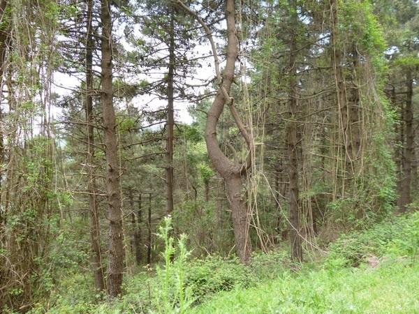 Эльбийский лес