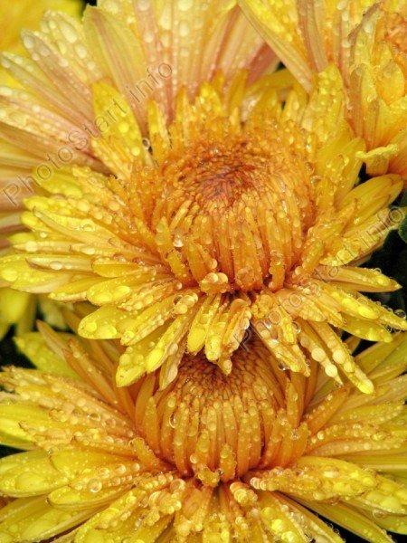 Один и тот же цвет или цветок в разных
