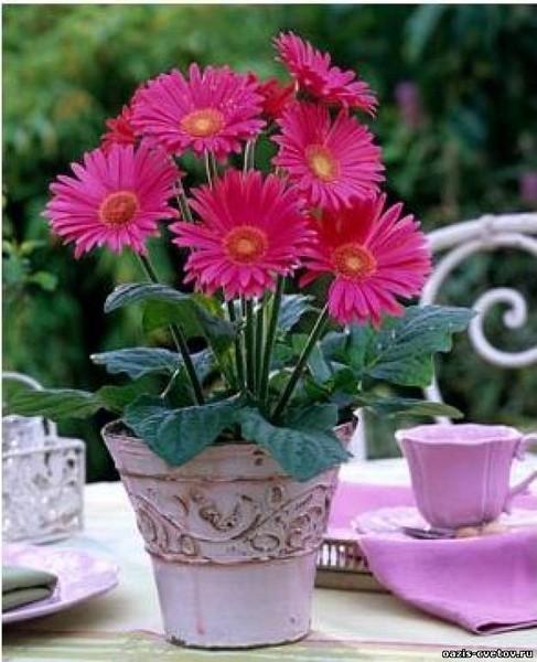 Цветок 4