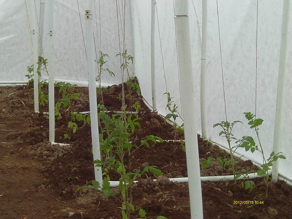 Вести с полей, садов и огородов-2012 - Страница 5 I-38