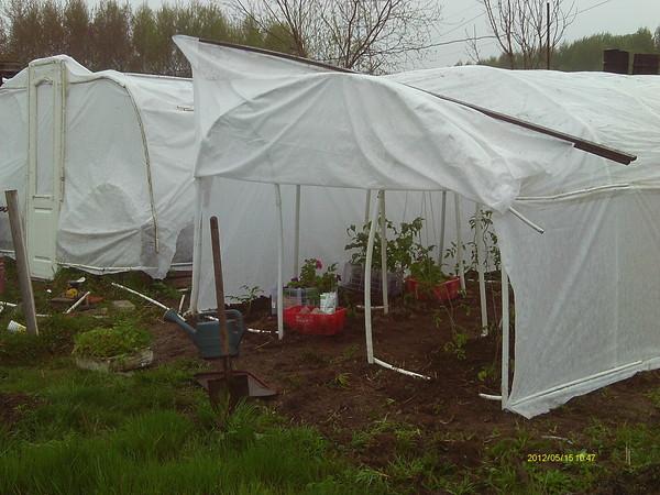 Вести с полей, садов и огородов-2012 - Страница 5 I-40