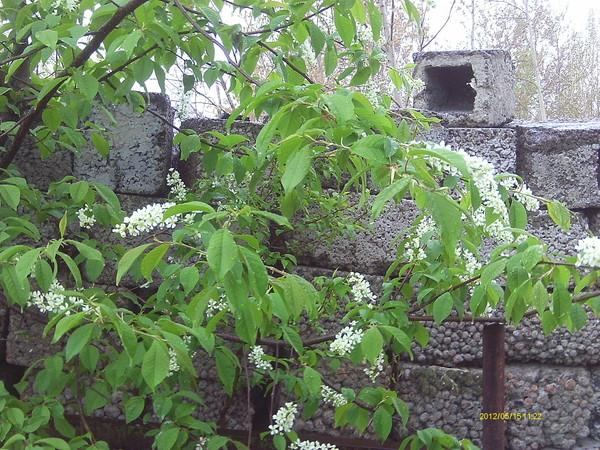 Вести с полей, садов и огородов-2012 - Страница 5 I-41