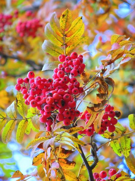 Золотая осень 2010 фото