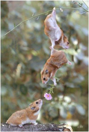 Хомяки поздравительные))). Хомяки, поздравление, День Святого Валентина